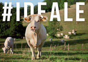 vache-egerie-salon-agriculture-2020
